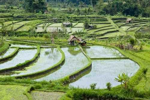 i-sistemi-d'irrigazione