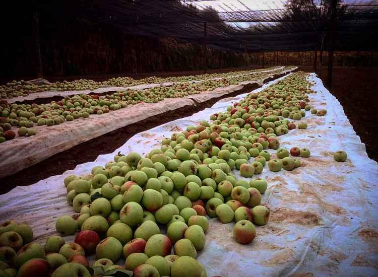 Facciamo chiarezza sulla certificazione di Agricoltura Biologica