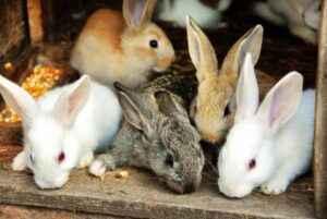 Ecosistema ideale per l'allevamento del coniglio