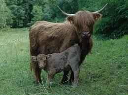 come capire quanto latte fa la mia vacche?