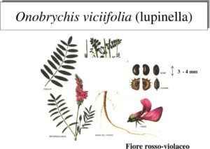 Come distinguere la Sulla dalla Lupinella