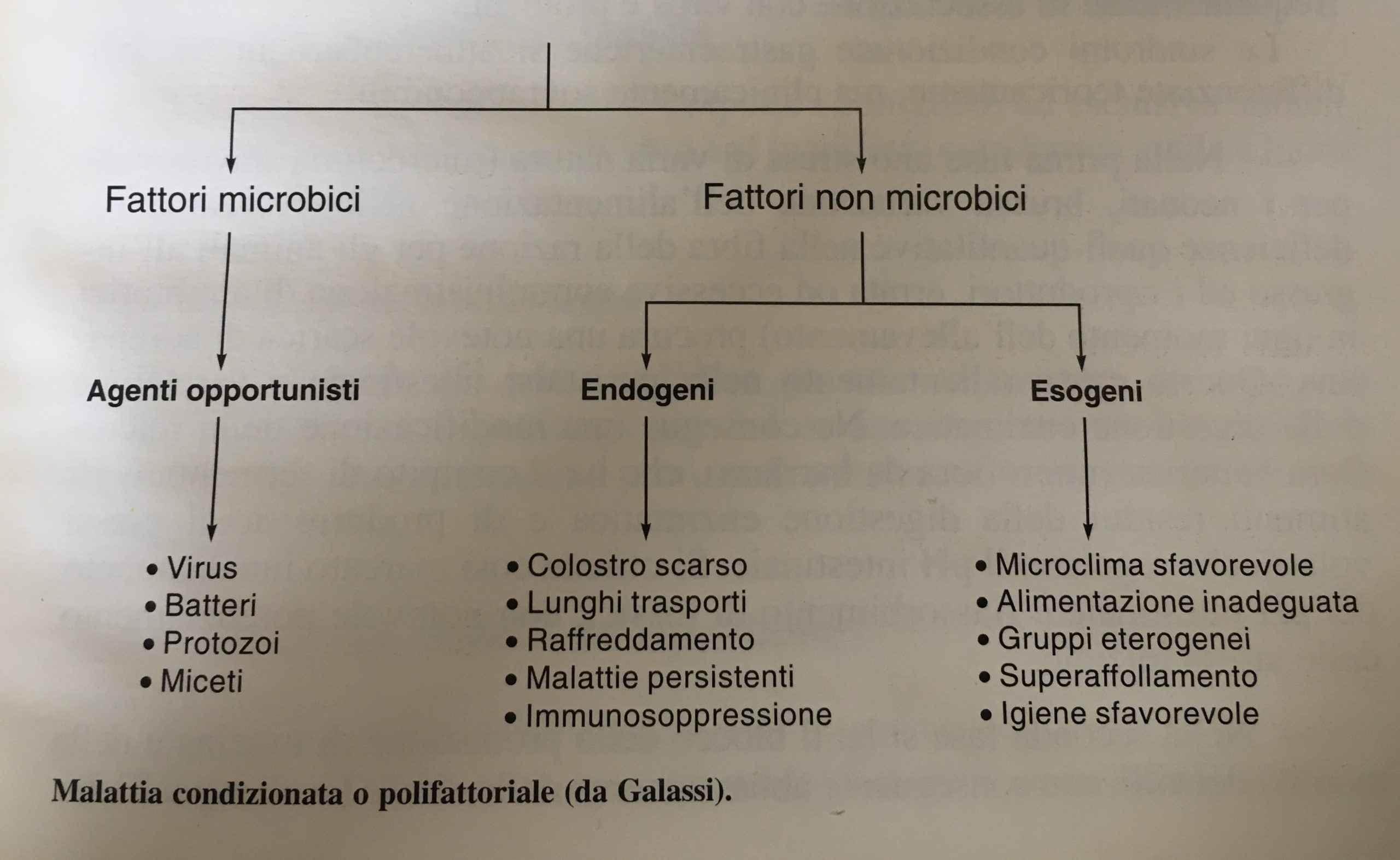 Come prevenire Le Patologie dei Conigli
