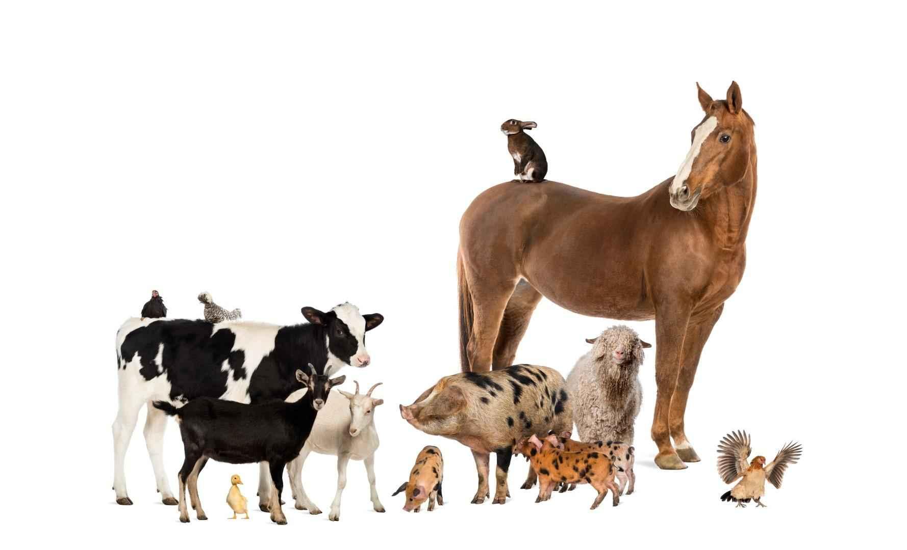 Regolamento per la Detenzione d'Animali per Autoconsumo